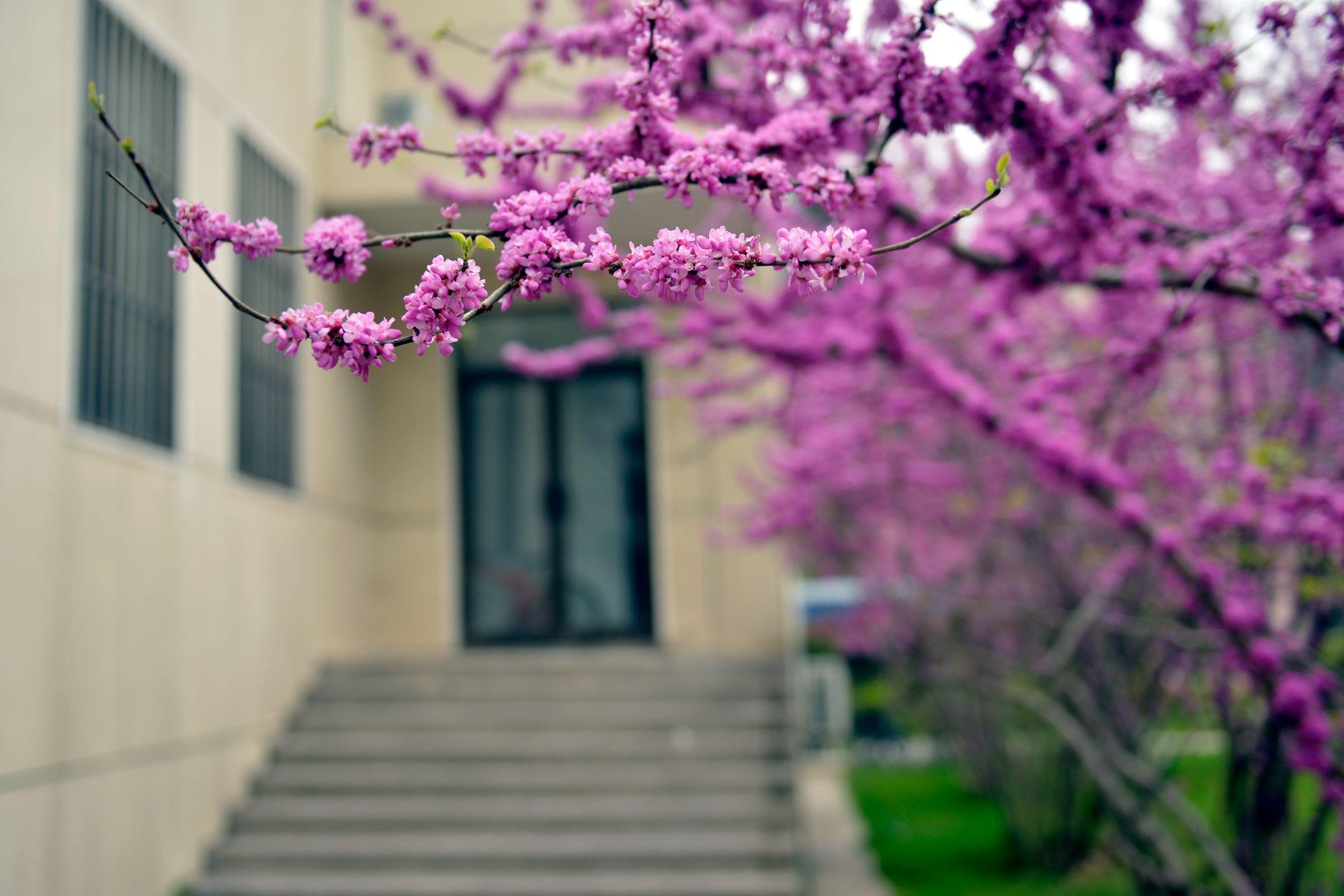 你好,春天