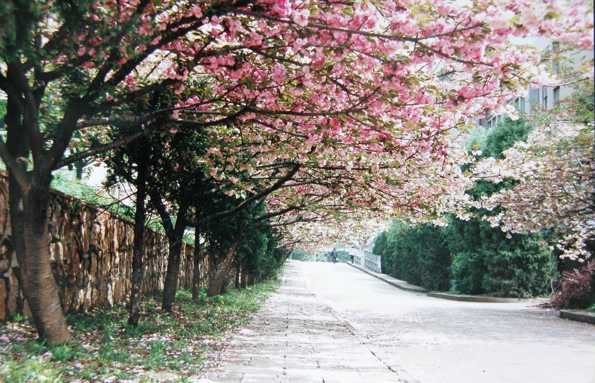 和你一起走过南农的春夏秋冬